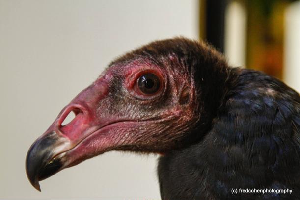 Home Wild Bird Fund